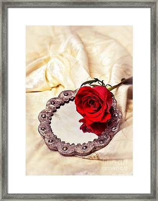 Red Rose Framed Print by Amanda Elwell