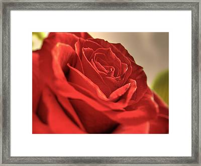 Red Rose Closeup Framed Print by Vlad Baciu