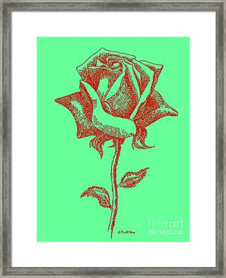 Red Rose Drawings 8 Framed Print by Gordon Punt