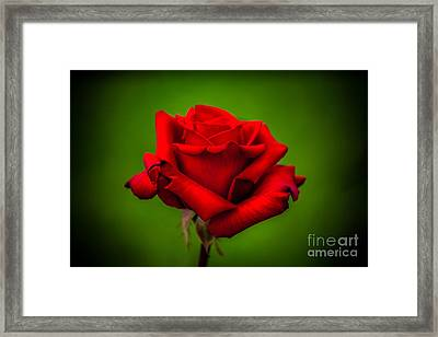 Red Rose Green Background Framed Print by Az Jackson