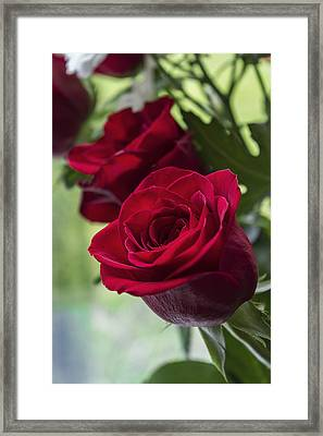 Red Rose Framed Print by Ian Mitchell