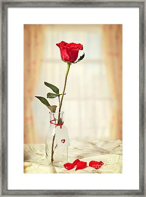 Red Rose In Bottle Framed Print