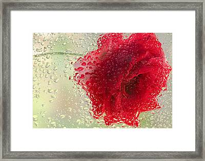 Red Rose In The Rain Framed Print by Don Schwartz
