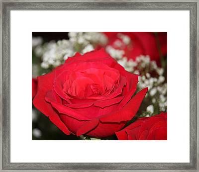 Red Rose Framed Print by Kimber  Butler