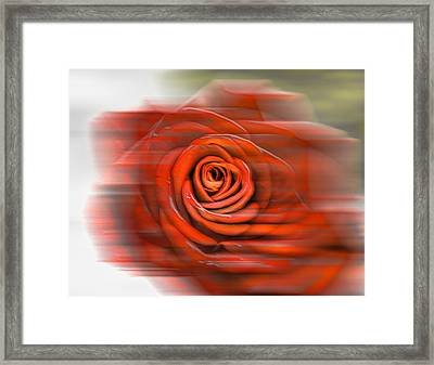 Framed Print featuring the photograph Red Rose by Leif Sohlman