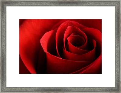 Red Rose Macro Framed Print by Johan Swanepoel