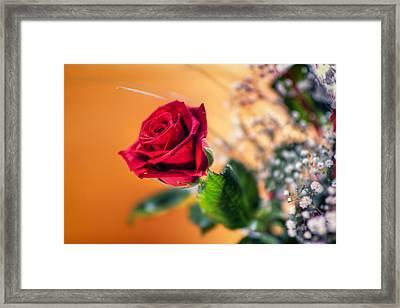 Red Rose Of Love Framed Print