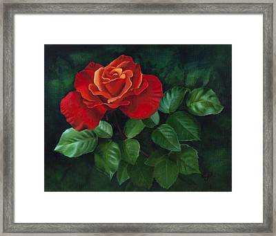 Red Rose - Oil Painting On Canvas Framed Print