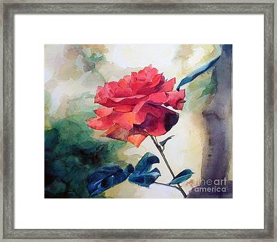 Red Rose On A Branch Framed Print