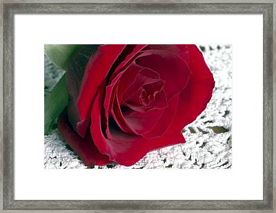 Red Rose On Lace Framed Print by Sharon Talson