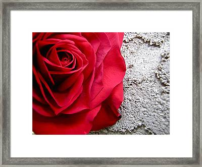 Red Rose On Wall Framed Print