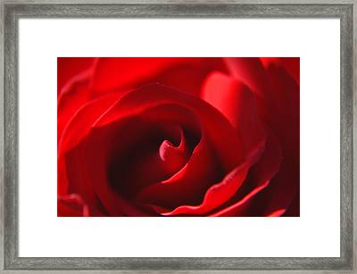 Framed Print featuring the photograph Red Rose by Tikvah's Hope