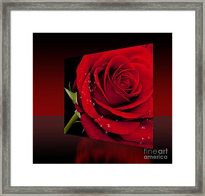 Framed Print featuring the photograph Red Rose by Shirley Mangini