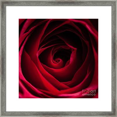 Red Rose Square Framed Print by Matt Malloy