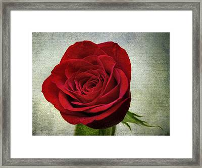 Red Rose V2 Framed Print by Ian Mitchell