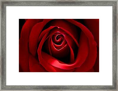 Red Rose Framed Print