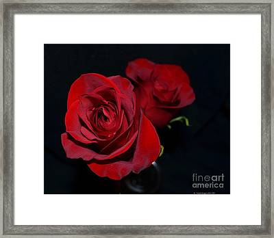 Red Roses For A Blue Lady Framed Print