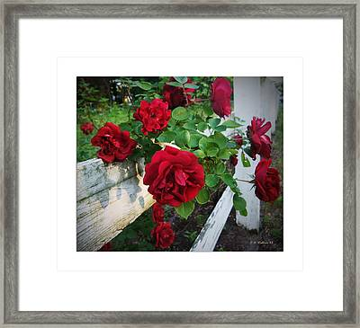 Red Roses - White Fence Framed Print by Brian Wallace