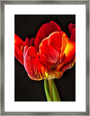 Red Ruffles Framed Print by Joan Herwig