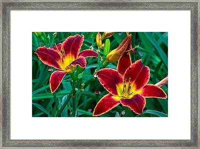 Red Rum Daylilies Framed Print