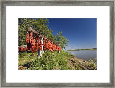 Red Salmon Hang On Drying Rack Along Framed Print by Kevin Smith