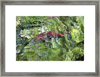 Framed Print featuring the photograph Red Salmon In Steep Creek by Cathy Mahnke