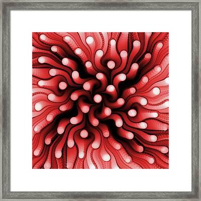 Red Sea Anemone Framed Print by Anastasiya Malakhova