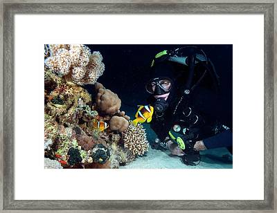 Red Sea Clownfish And Diver Framed Print by Louise Murray