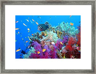 Red Sea Colours Framed Print