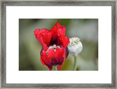 Red Sensation Framed Print by Sonali Gangane