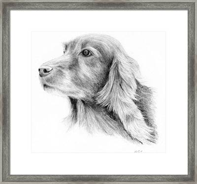 Red Setter Framed Print by Mary Mayes