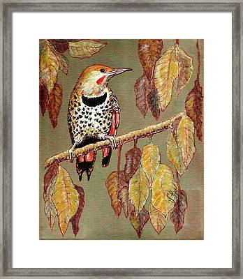 Framed Print featuring the painting Red Shafted Flicker by VLee Watson