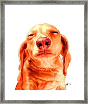Red Shorthaired Dachshund Framed Print by Iain McDonald