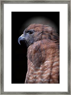 Red Shouldered Hawk 295 Framed Print by Joyce StJames