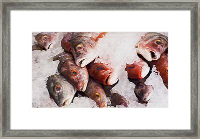 Red Snapper Framed Print by Aged Pixel