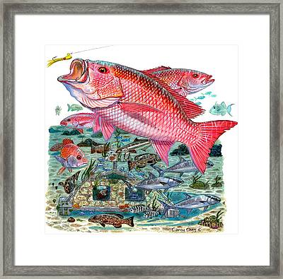 Red Snapper Framed Print by Carey Chen