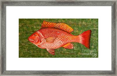 Red Snapper Framed Print