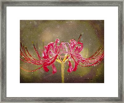 Red Spider Lily In Rain Framed Print by Bellesouth Studio