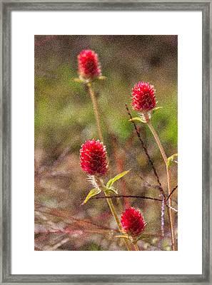 Red Spiky Flowers Framed Print by Karen Stephenson