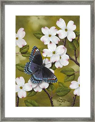 Red Spotted Purple Framed Print