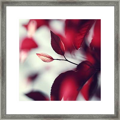 Red Spring Framed Print by Beata  Czyzowska Young