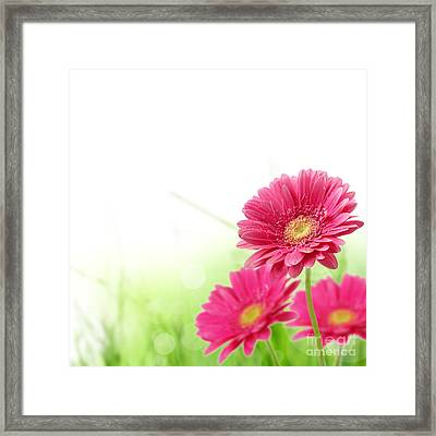 Red Spring Flowers Framed Print by Boon Mee