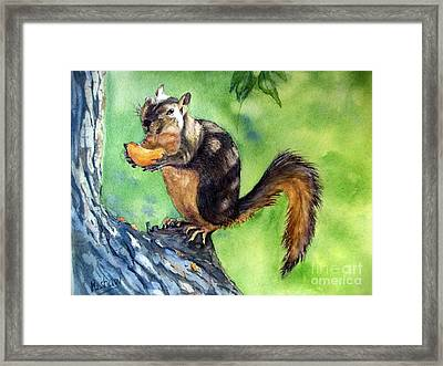 Red Squirrel And Orange  Framed Print