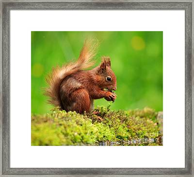 Red Squirrel With A Nut Framed Print by Louise Heusinkveld