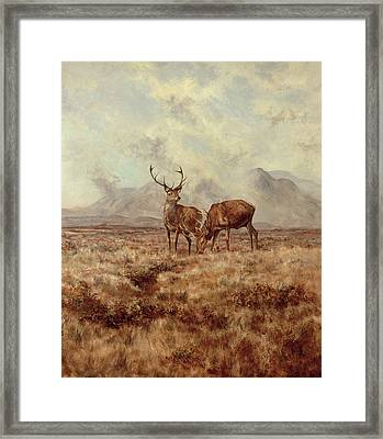 Red Stags, Ben Buie Framed Print