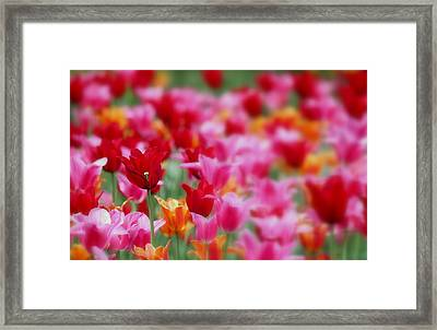 Red Stand Out Framed Print by Rosanne Jordan