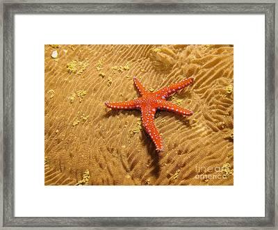 Red Star  Framed Print by Gary Bridger