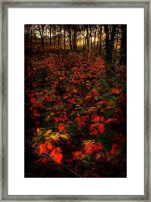 Red Sumac Framed Print by Robert Charity