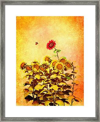 Red Sunflower Framed Print by Bob Orsillo