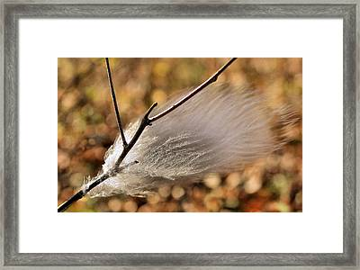 Red Tail Hawk Feather Framed Print by Kristin Elmquist